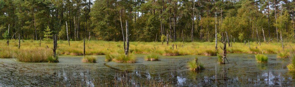 Luonnonvarainen suo on kokonainen ekosysteemi, jonka tuhoaminen vaikuttaa laajasti alueen ympäristöön.