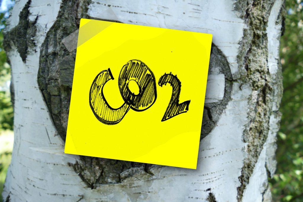 Koivun rungossa CO2-lappu