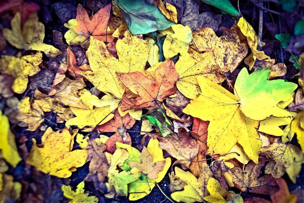 Kuolleita lehtiä karikkeen pinnalla.