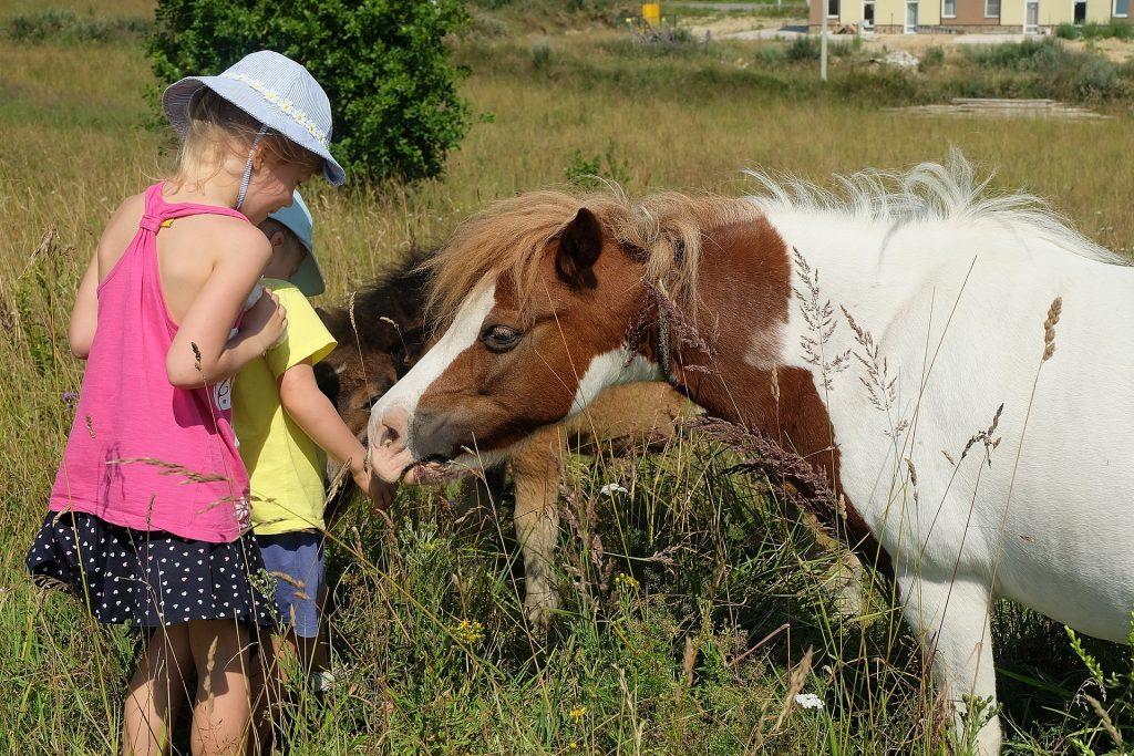 Kaksi lasta syöttää hevosia laitumella.