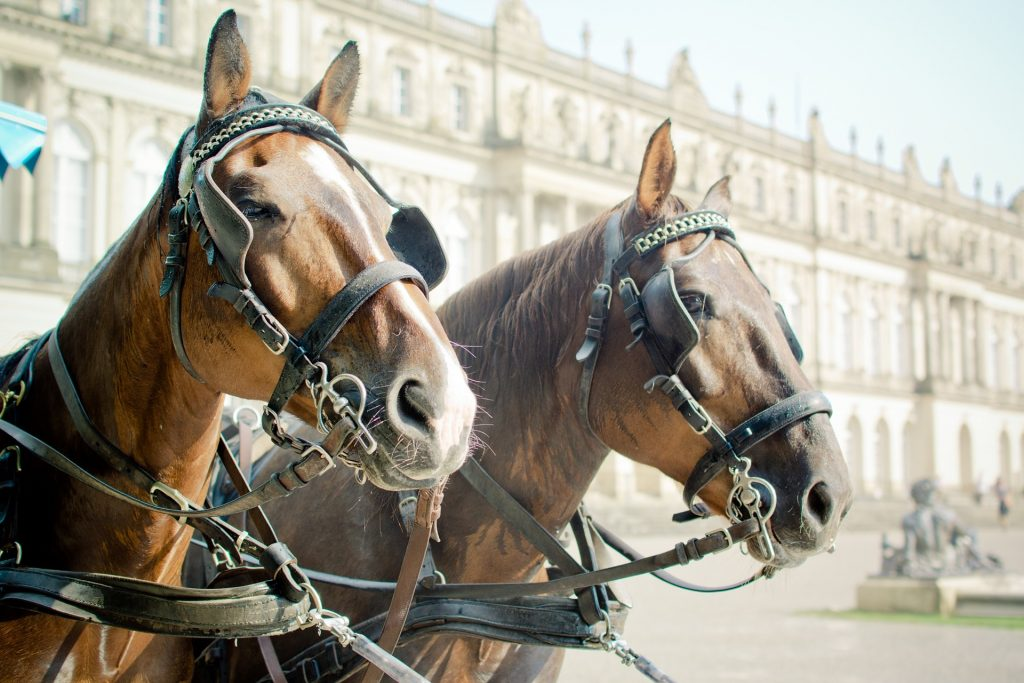 Hevosvaljakko, hevosilla silmälaput