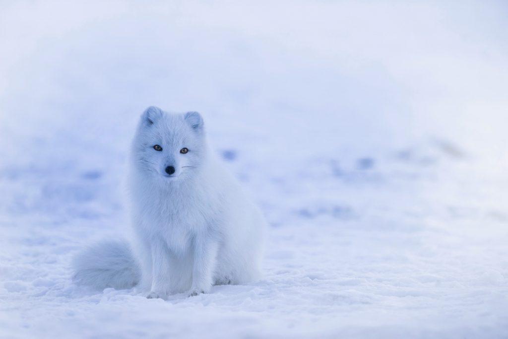 Eläimet suojautuvat kylmältä paksulla turkilla, ihminen  vaatteilla ja lämpimällä asetuksella.