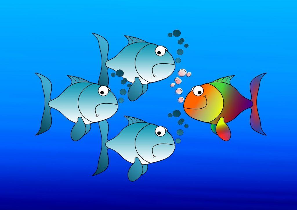 Erikoisen värinen kala ui harmaata kalojen joukkoa vastaan.